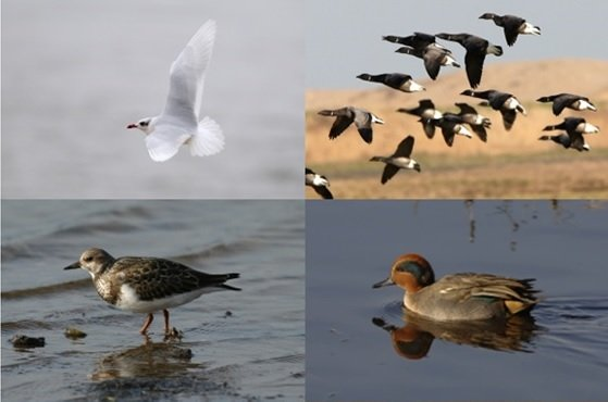 Guided Wildlife Walk, One Stop Nature Shop, Dalegate Market, Burnham Deepdale, North Norfolk Coast, PE31 8FB | A casual walk along flat terrain for birdwatchers of all abilities.  Book in advance in the One Stop Nature Shop. | Deepdale Backpackers & Camping Events, Courses & Activities