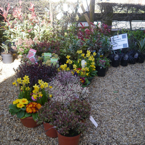 Pop Up Flower & Plant Stall | Here at Dalegate Market we're really pleased to be hosting Lilac Nurseries, with a wonderful seasonal selection of flowers, plants and other gardening items. - Dalegate Market | Shopping & Café, Burnham Deepdale, North Norfolk Coast, England, UK