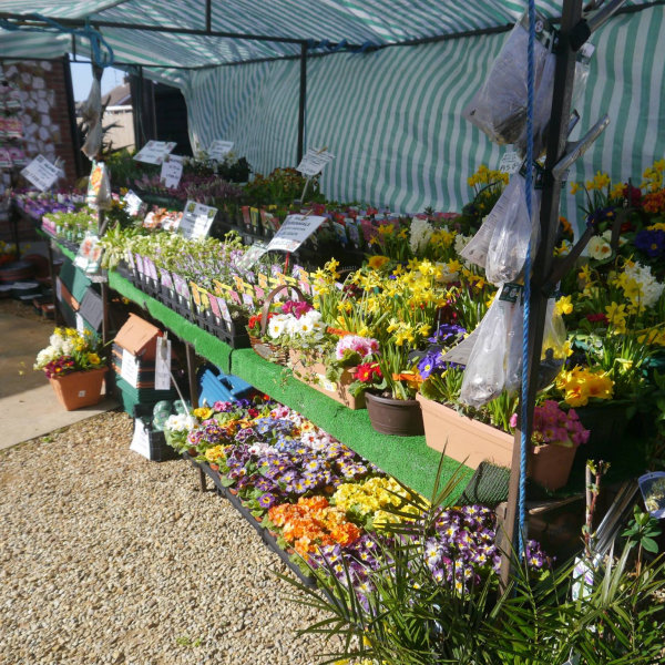 Pop Up Flower & Plant Stall, By the beach hut pop up shops from Easter to October.  In the front car park in the Winter. | Here at Dalegate Market we're really pleased to be hosting Lilac Nurseries on the first Sunday of each month throughout the year*, with a wonderful seasonal selection of flowers, plants and other gardening items. | pop up shop, flowers, plants, gardening, stall, seasonal, spring, summer, autumn, winter, lilac, nurseries, dalegate market, burnham deepdale, north norfolk coast