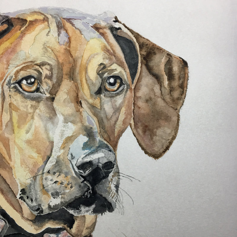 Clare Insall Art (Cci) - I'm still in the process of creating a website (details of website and Facebook to follow shortly).   However, I'm a Local water colour artist  Majority of paintings are mounted and framed.  - Deepdale Spring Market | Friday 29th to Sunday 31st March 2019