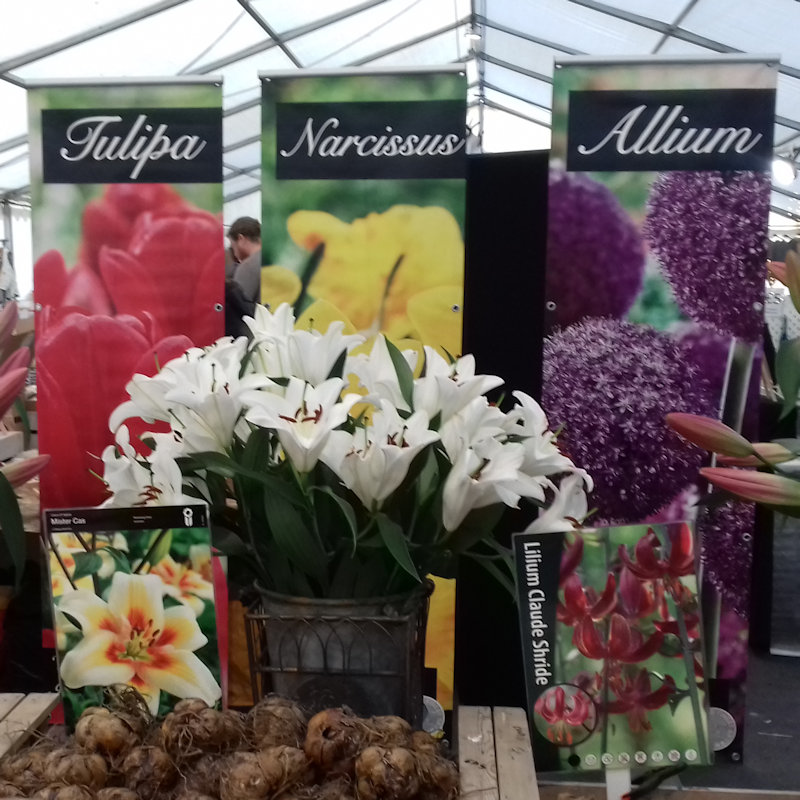 Woodland Nurseries - Exotic flowering bulbs and corms. Corms consisting of giant tree lilly bulbs, growing up to six to eight feet tall. Hybrid premium tulips in bulbs and flowering and zanterdesia lilies. - Deepdale Spring Market | Friday 27th to Sunday 29th March 2020